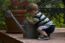 toddler is curious of watercan